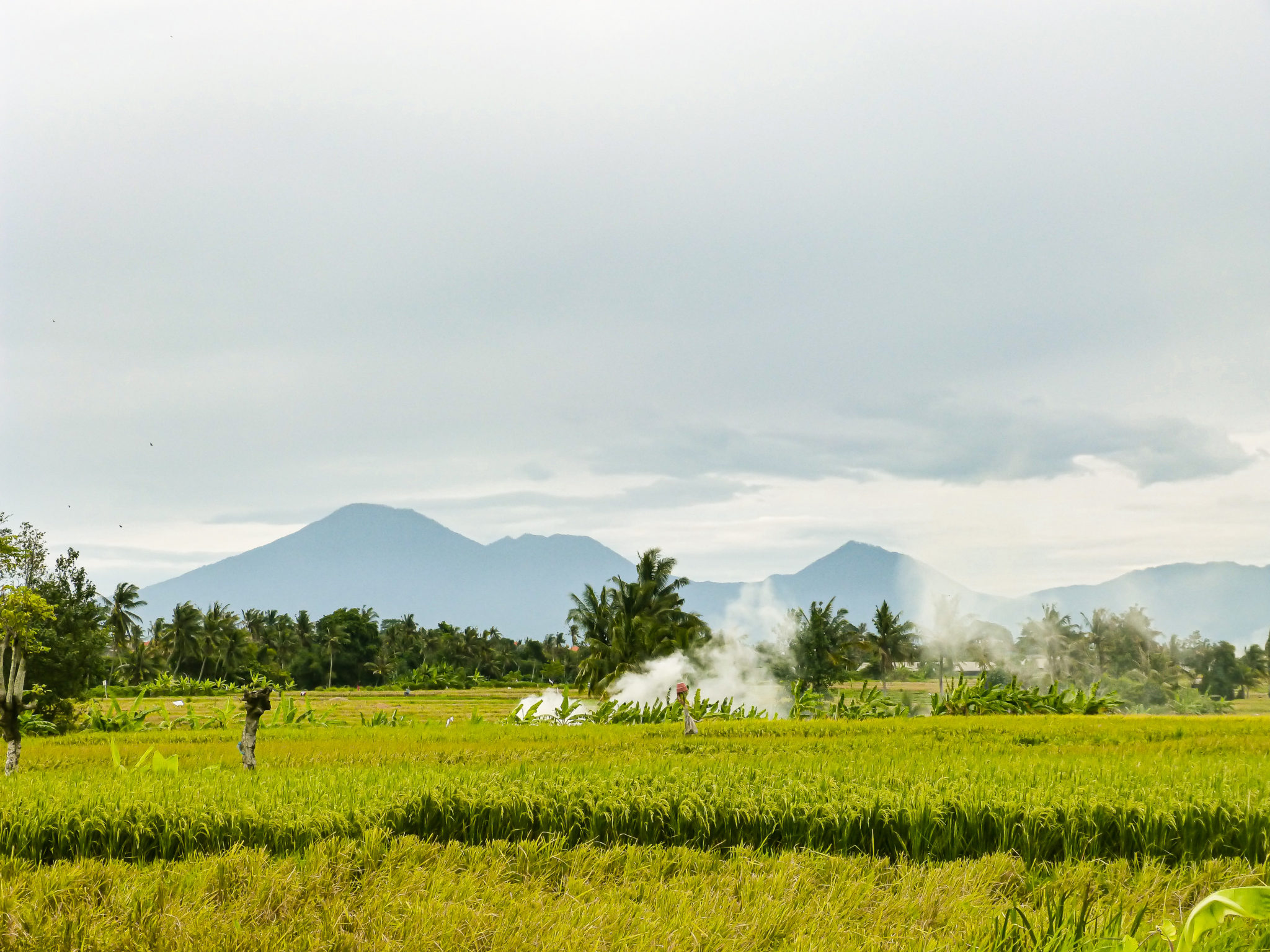 rice paddies on the bali travel route
