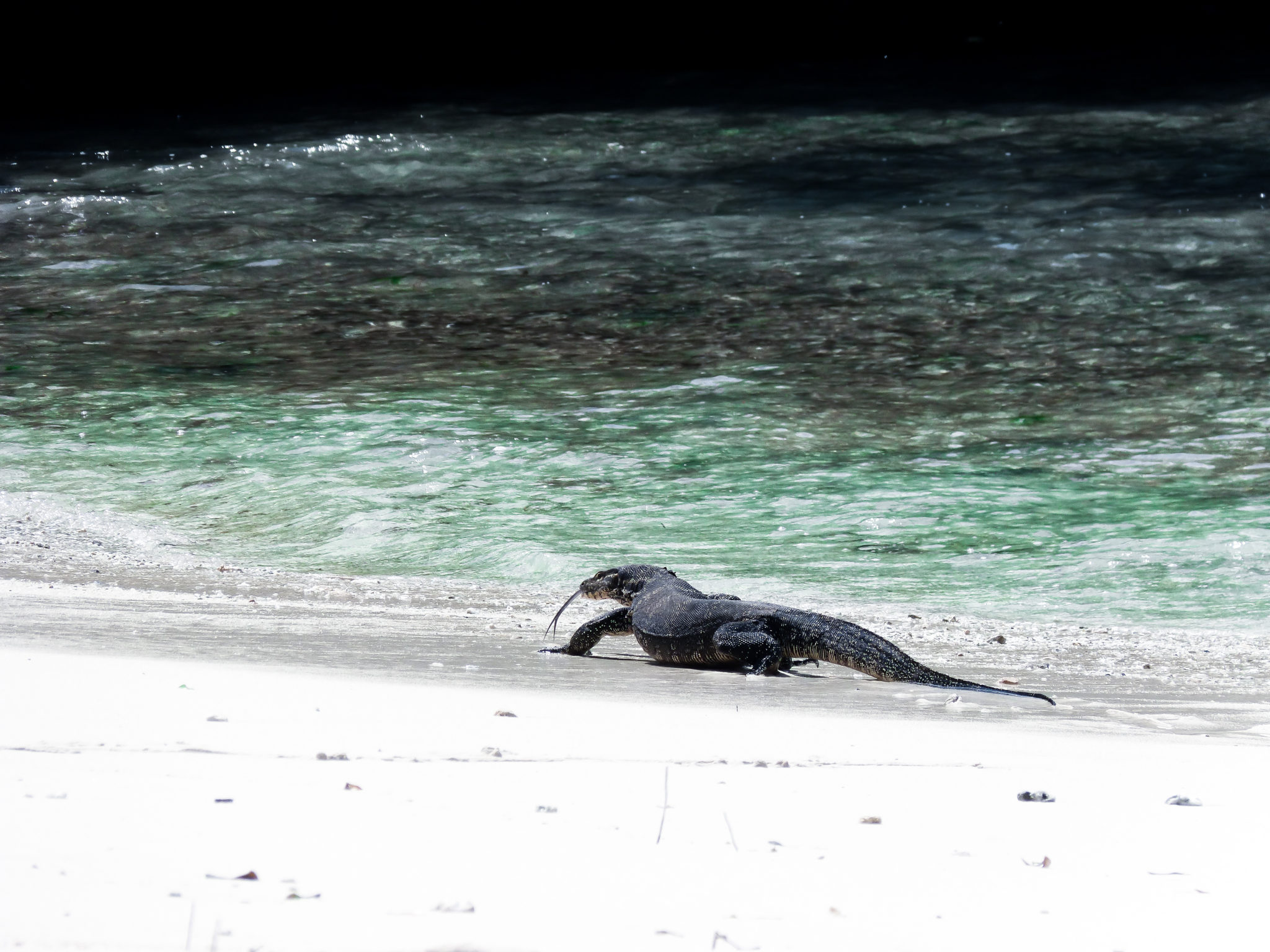 Bali travel route Wildlife
