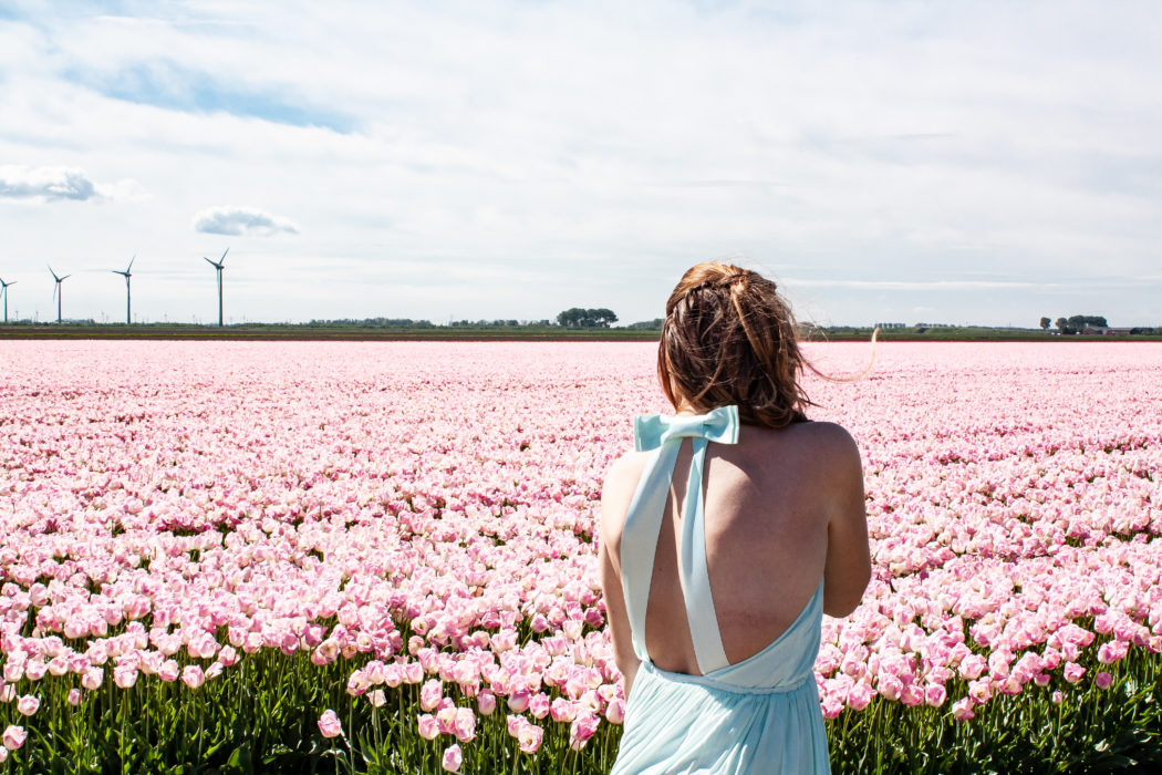 How to Visit Tulip Fields in the Netherlands