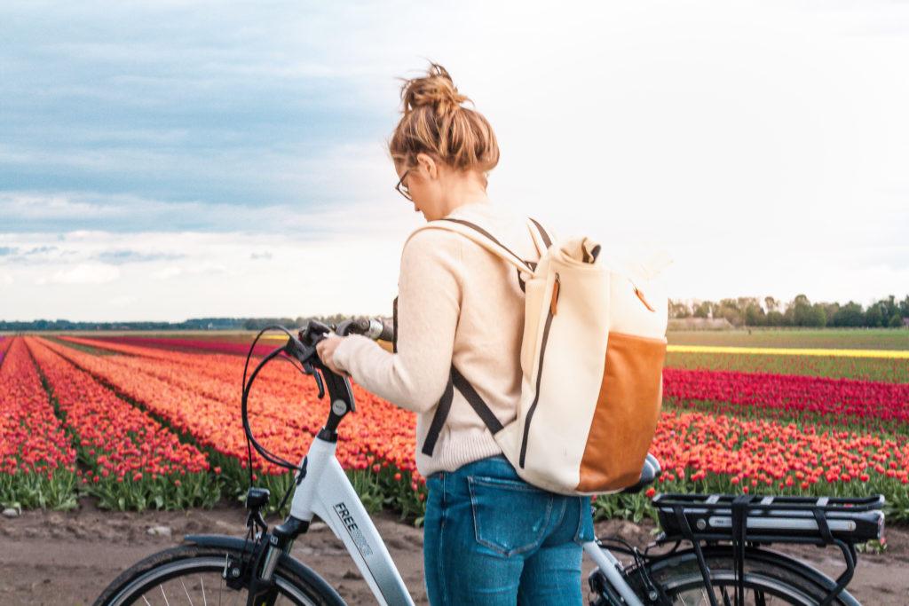 tulip fields in the netherlands bike tour