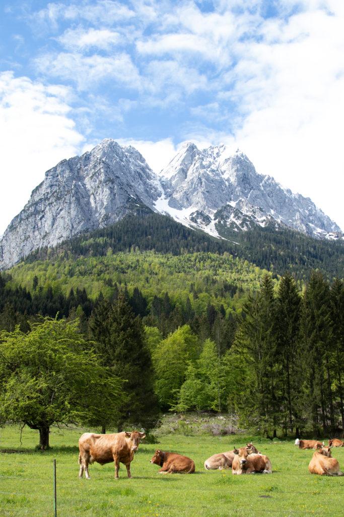 Travel guide to Garmisch-Partenkirchen: Hammersbacher Fussweg
