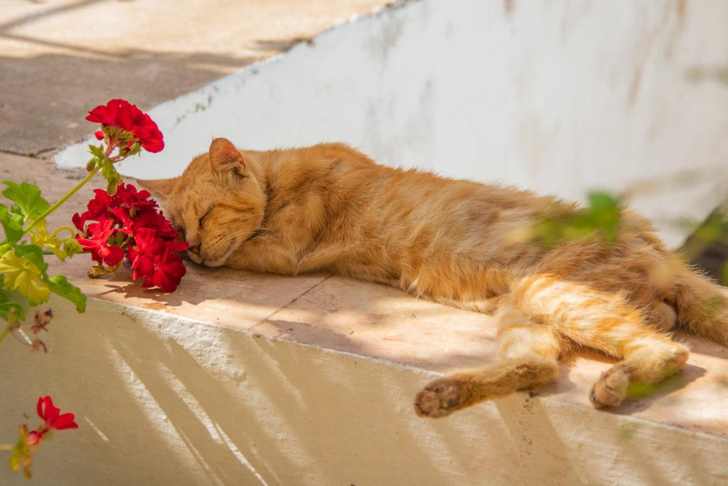 the best things to do in Corfu: Cat at Paleokastritsa Monastery